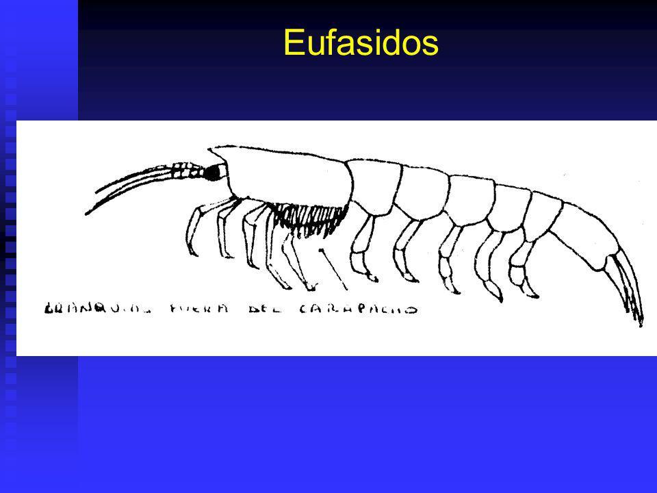 Eufasidos