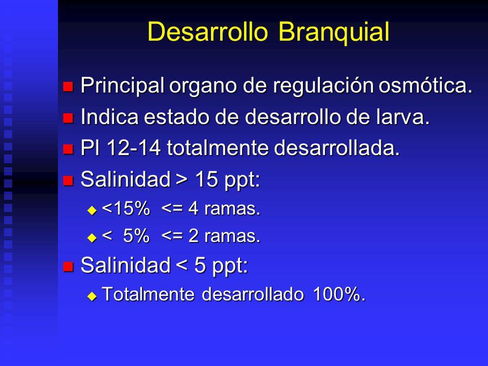 Desarrollo Branquial Principal organo de regulación osmótica. Principal organo de regulación osmótica. Indica estado de desarrollo de larva. Indica es