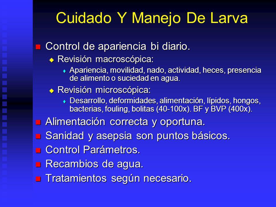 Cuidado Y Manejo De Larva Control de apariencia bi diario. Control de apariencia bi diario. Revisión macroscópica: Revisión macroscópica: Apariencia,