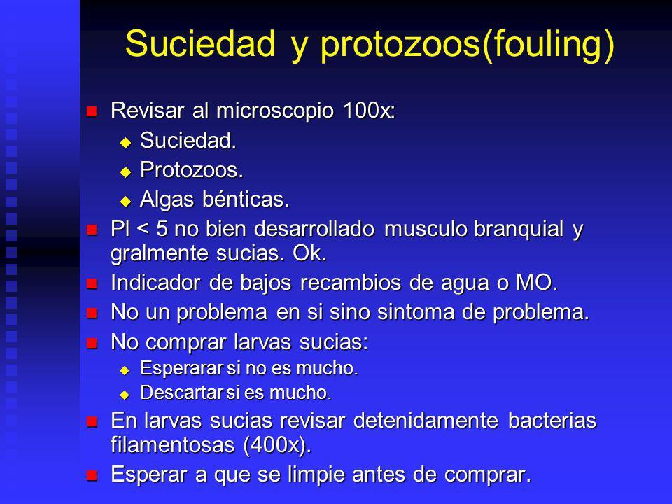 Suciedad y protozoos(fouling) Revisar al microscopio 100x: Revisar al microscopio 100x: Suciedad. Suciedad. Protozoos. Protozoos. Algas bénticas. Alga