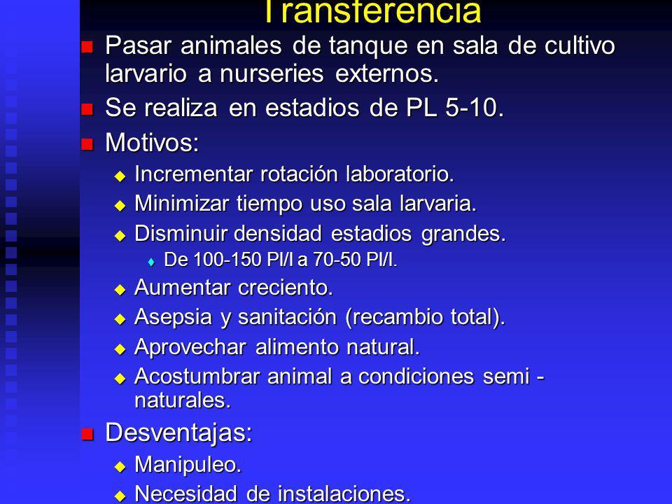 Transferencia Pasar animales de tanque en sala de cultivo larvario a nurseries externos. Pasar animales de tanque en sala de cultivo larvario a nurser