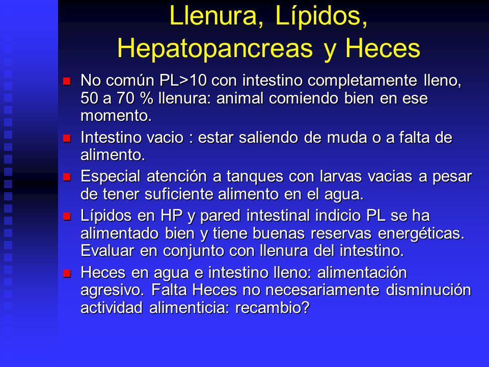 Llenura, Lípidos, Hepatopancreas y Heces No común PL>10 con intestino completamente lleno, 50 a 70 % llenura: animal comiendo bien en ese momento. No