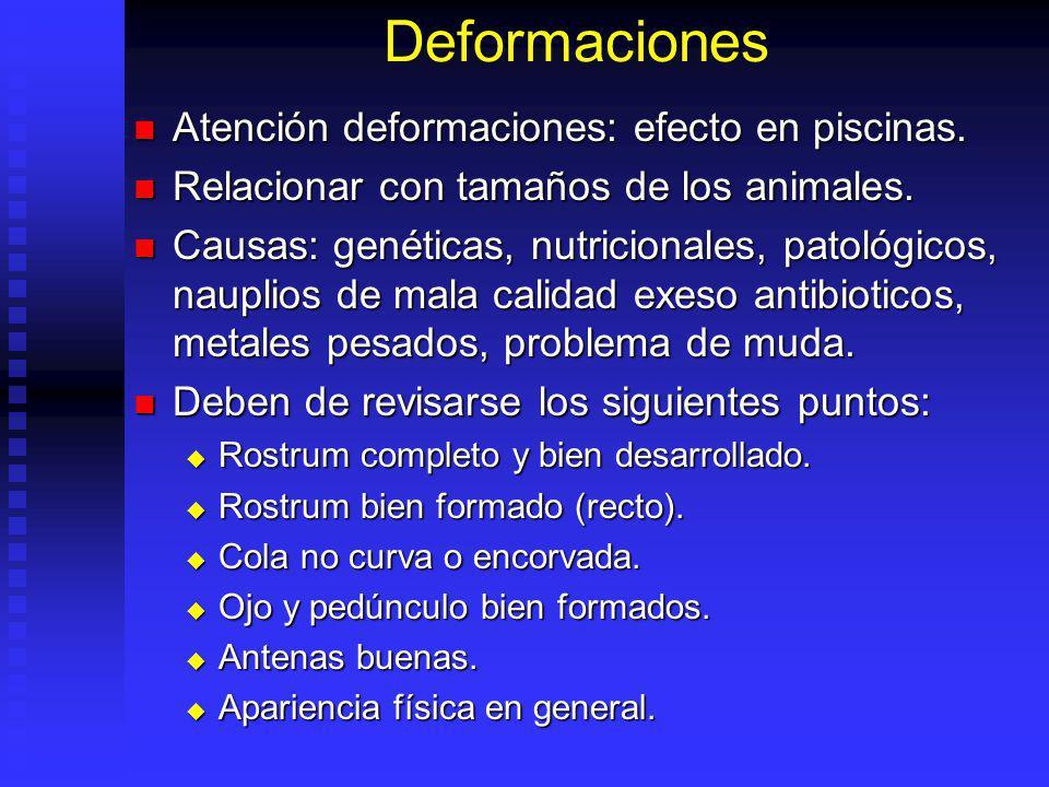 Deformaciones Atención deformaciones: efecto en piscinas. Atención deformaciones: efecto en piscinas. Relacionar con tamaños de los animales. Relacion