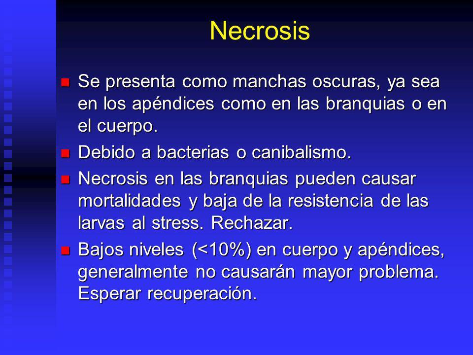 Necrosis Se presenta como manchas oscuras, ya sea en los apéndices como en las branquias o en el cuerpo. Se presenta como manchas oscuras, ya sea en l