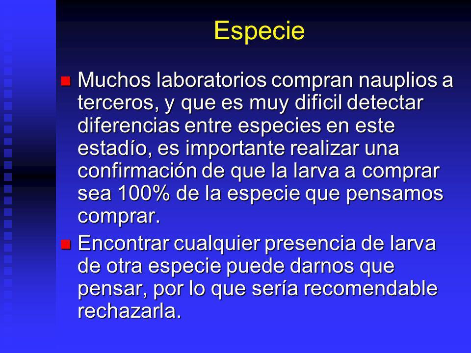 Especie Muchos laboratorios compran nauplios a terceros, y que es muy dificil detectar diferencias entre especies en este estadío, es importante reali