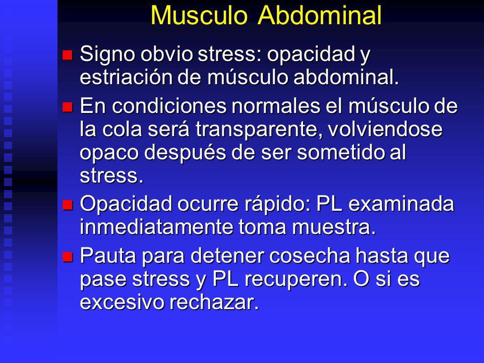 Musculo Abdominal Signo obvio stress: opacidad y estriación de músculo abdominal. Signo obvio stress: opacidad y estriación de músculo abdominal. En c