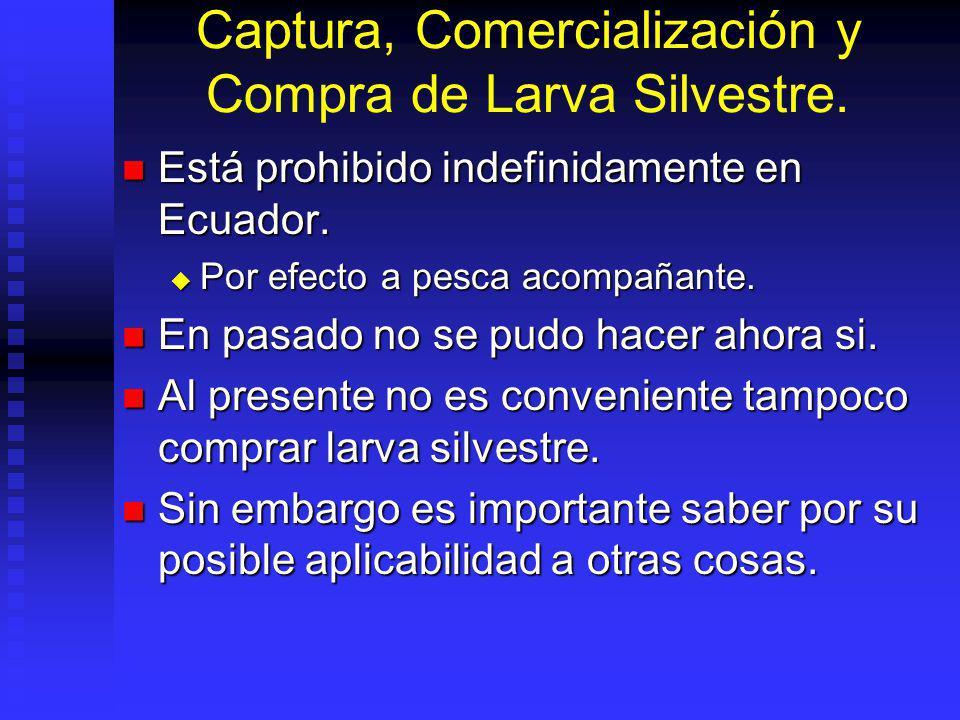 Captura, Comercialización y Compra de Larva Silvestre. Está prohibido indefinidamente en Ecuador. Está prohibido indefinidamente en Ecuador. Por efect
