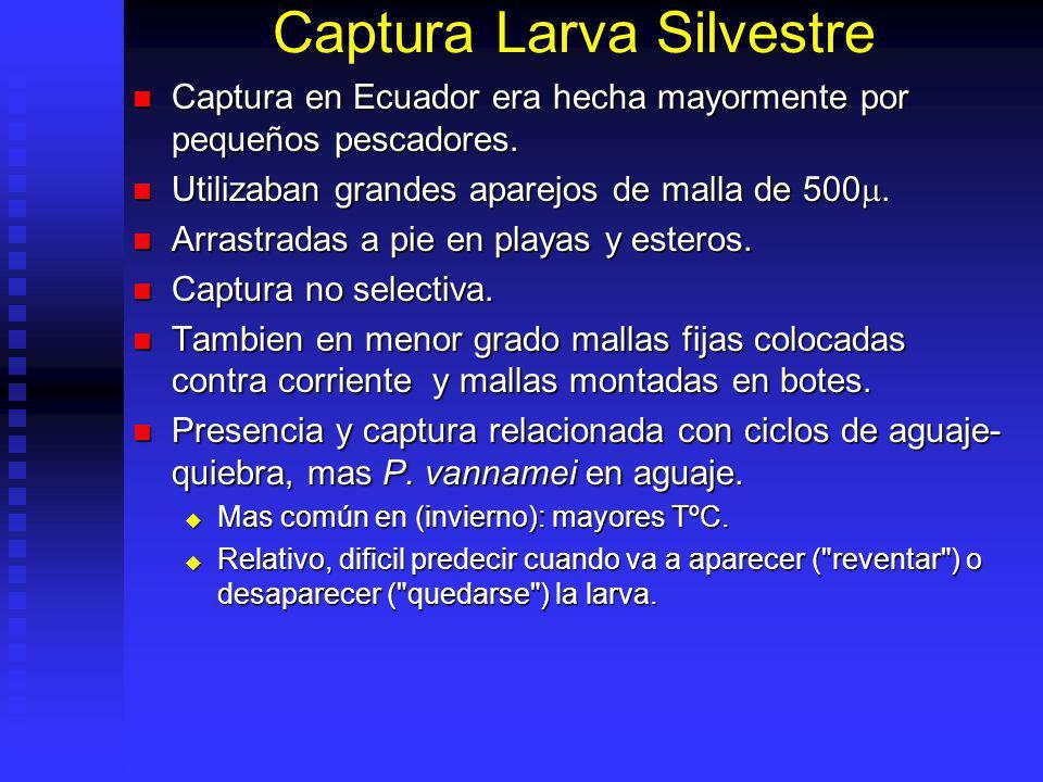 Captura Larva Silvestre Captura en Ecuador era hecha mayormente por pequeños pescadores. Captura en Ecuador era hecha mayormente por pequeños pescador