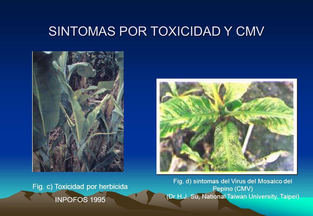 SINTOMAS POR TOXICIDAD Y CMV Fig.c) Toxicidad por herbicida INPOFOS 1995 Fig.
