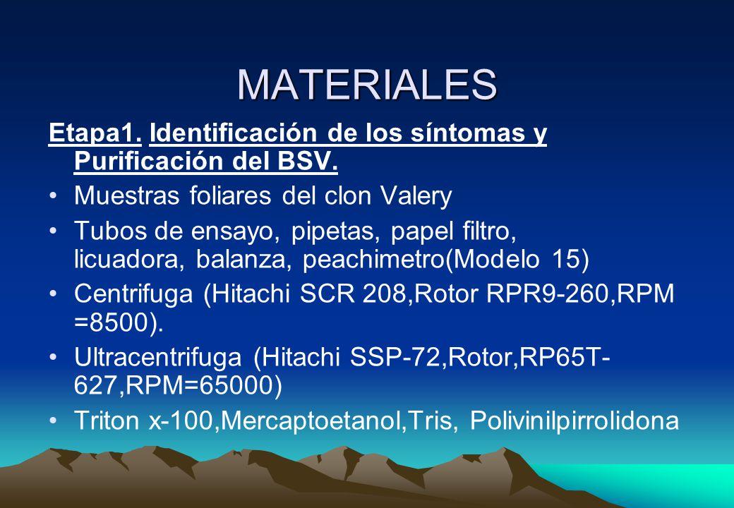 MATERIALES Etapa1.Identificación de los síntomas y Purificación del BSV.
