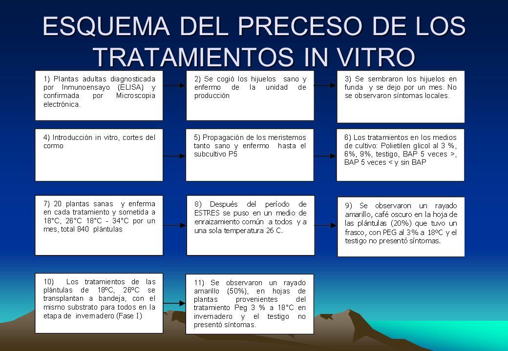 ESQUEMA DEL PRECESO DE LOS TRATAMIENTOS IN VITRO
