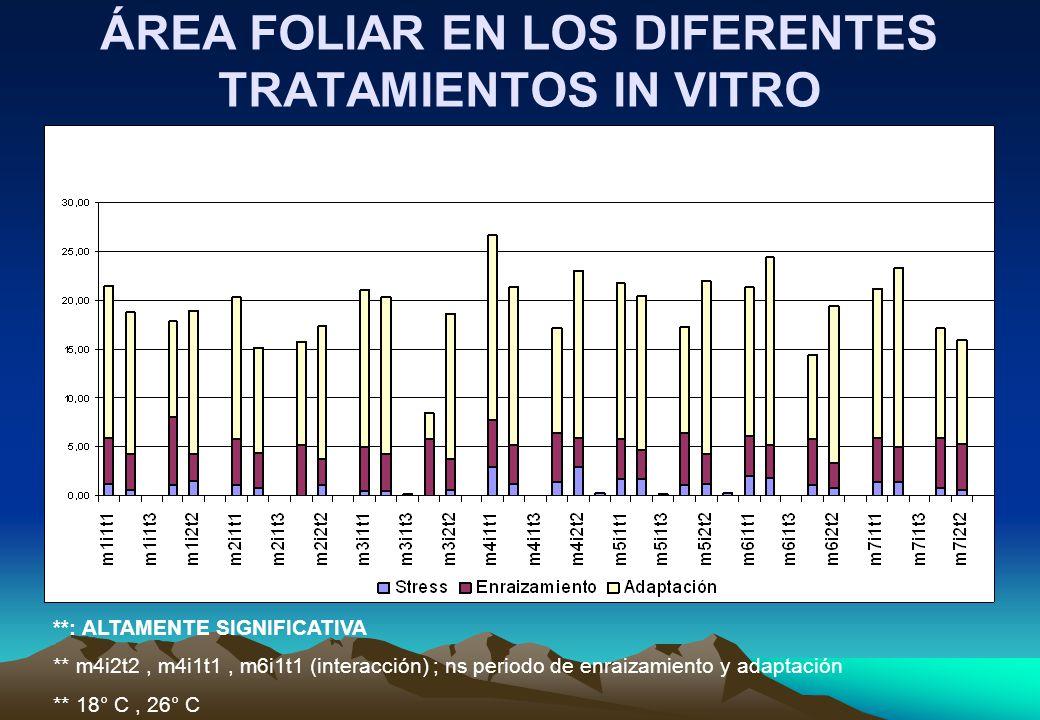 ÁREA FOLIAR EN LOS DIFERENTES TRATAMIENTOS IN VITRO **: ALTAMENTE SIGNIFICATIVA ** m4i2t2, m4i1t1, m6i1t1 (interacción) ; ns periodo de enraizamiento y adaptación ** 18° C, 26° C