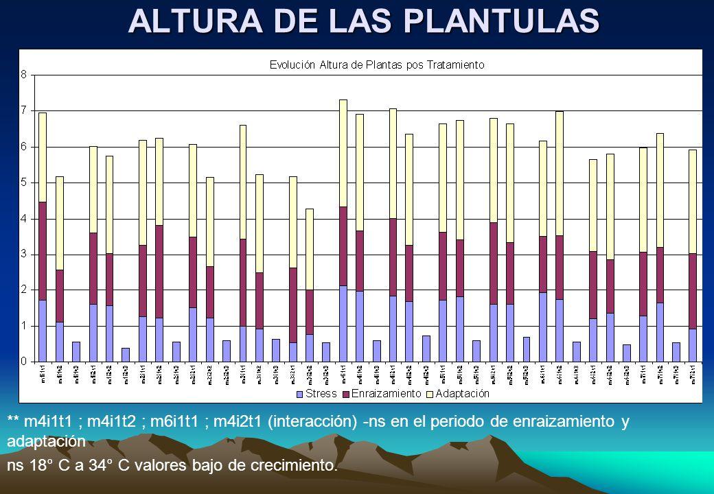 ALTURA DE LAS PLANTULAS ** m4i1t1 ; m4i1t2 ; m6i1t1 ; m4i2t1 (interacción) -ns en el periodo de enraizamiento y adaptación ns 18° C a 34° C valores bajo de crecimiento.