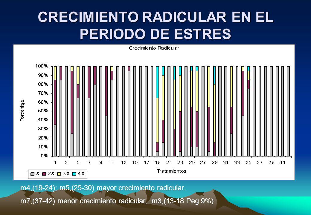 CRECIMIENTO RADICULAR EN EL PERIODO DE ESTRES m4,(19-24); m5,(25-30) mayor crecimiento radicular.