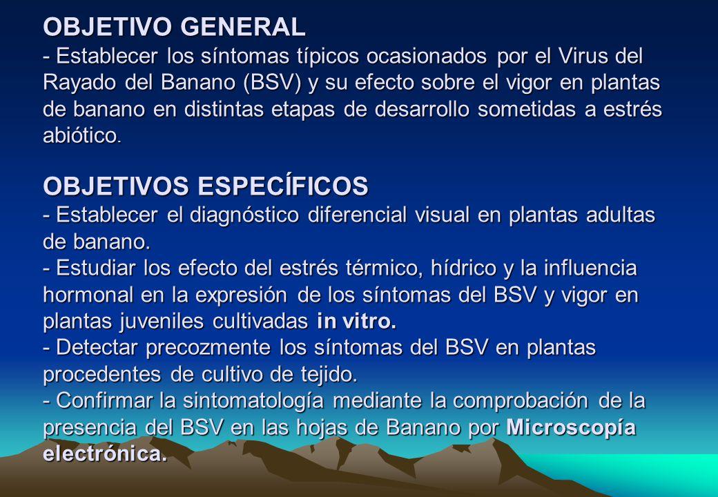 AGRADECIMIENTO A: Dra.Sofia Korneva Dr. Anselmo Otero Dr.
