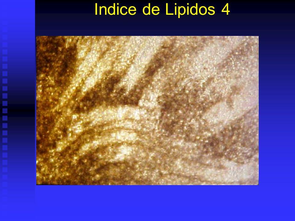 Indice de Lipidos 3