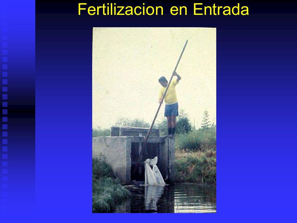 Fertilización Aporte de Nutrientes. Aporte de Nutrientes. Correcta disolución. Correcta disolución. Nutrientes limitantes. Nutrientes limitantes. Leer