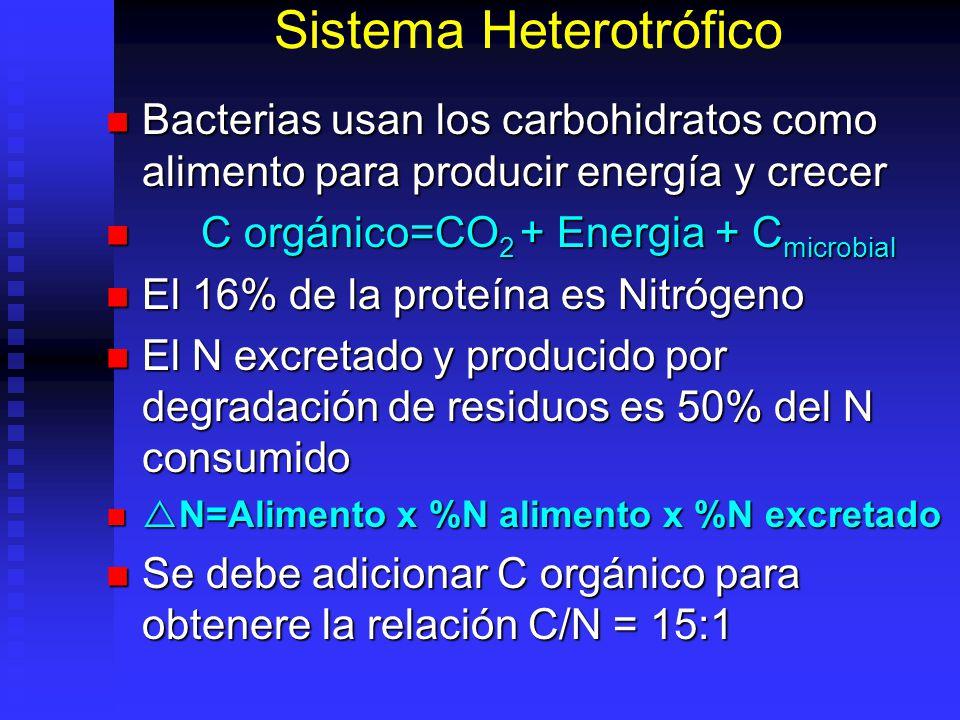 Sistema Heterotrófico La proteína microbial puede ser consumida como fuente de proteína por el camarón La proteína microbial puede ser consumida como