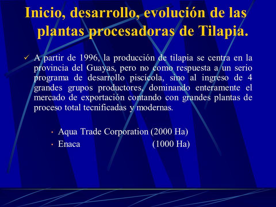 A partir de 1996, la producción de tilapia se centra en la provincia del Guayas, pero no como respuesta a un serio programa de desarrollo piscícola, s