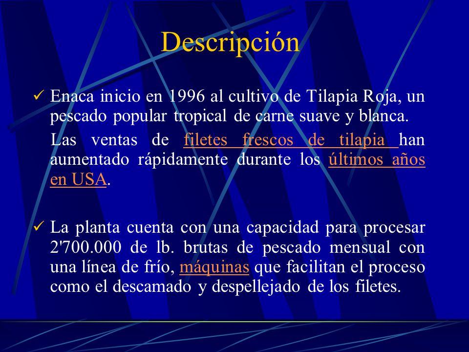 Enaca inicio en 1996 al cultivo de Tilapia Roja, un pescado popular tropical de carne suave y blanca. Las ventas de filetes frescos de tilapia han aum