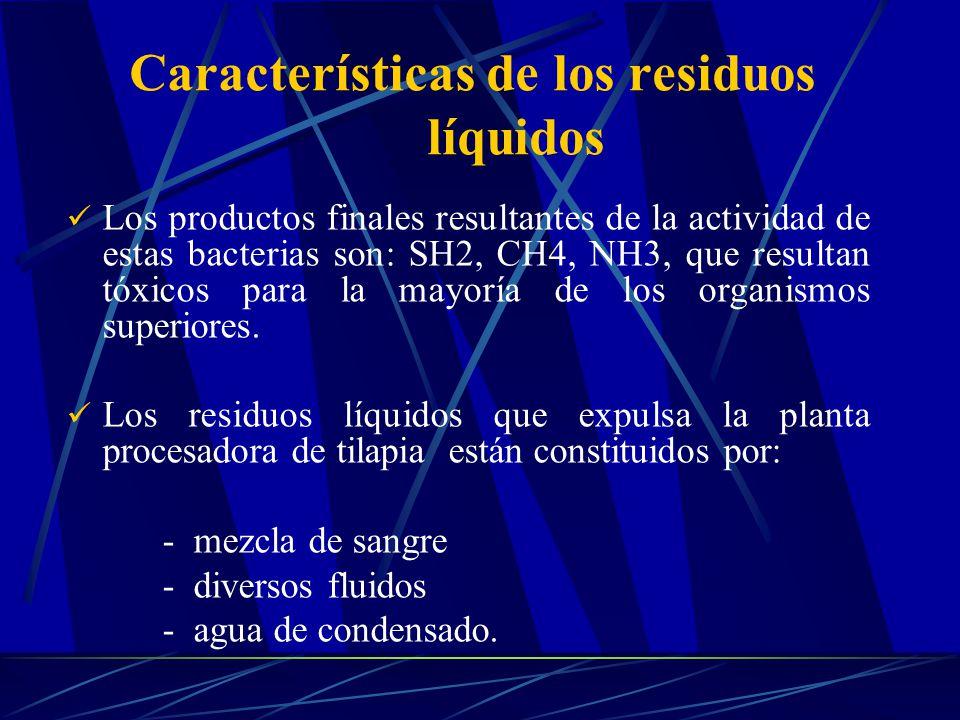 Los productos finales resultantes de la actividad de estas bacterias son: SH2, CH4, NH3, que resultan tóxicos para la mayoría de los organismos superi