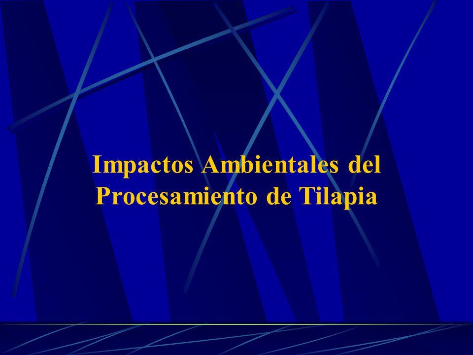 Impactos Ambientales del Procesamiento de Tilapia