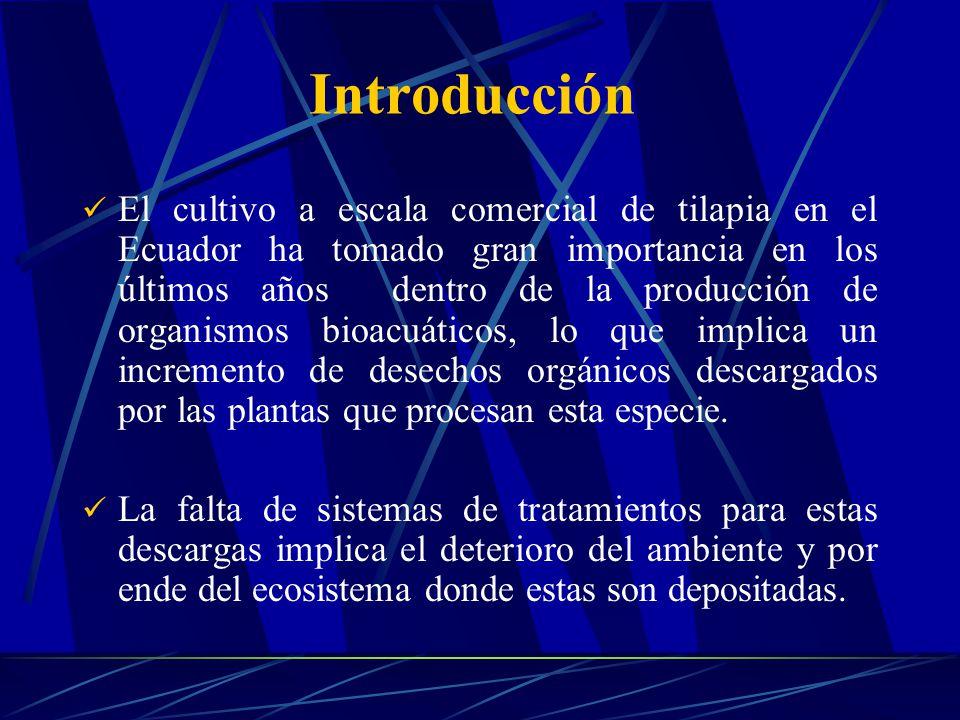 Introducción El cultivo a escala comercial de tilapia en el Ecuador ha tomado gran importancia en los últimos años dentro de la producción de organism