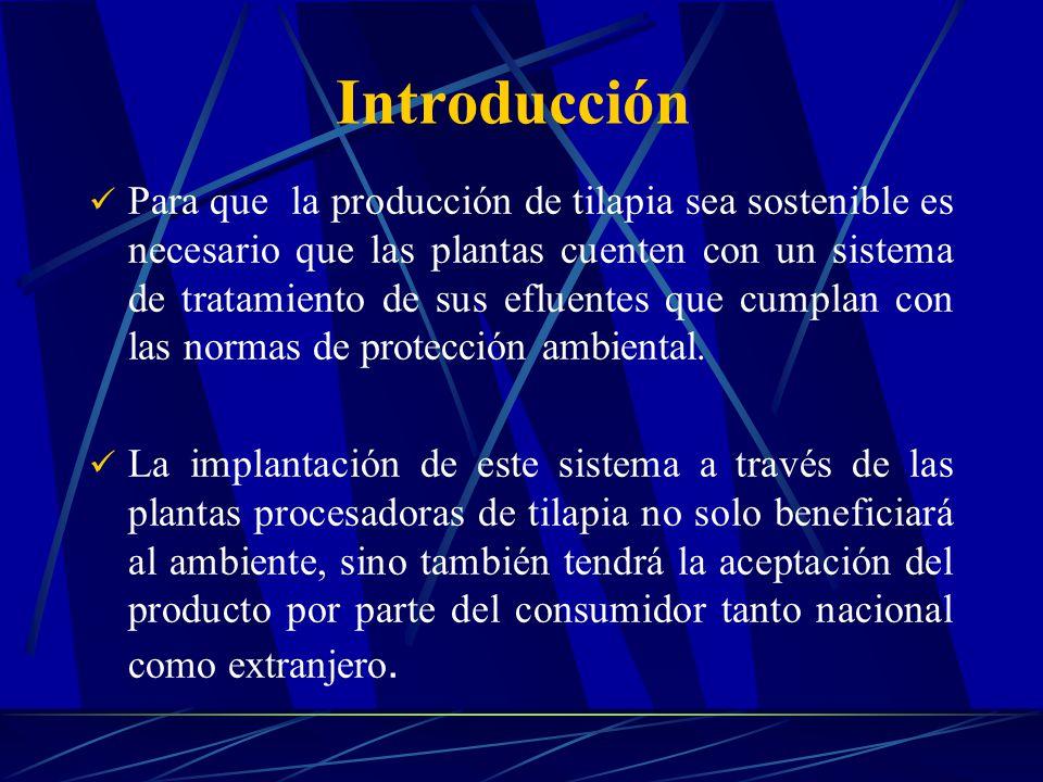 Introducción Para que la producción de tilapia sea sostenible es necesario que las plantas cuenten con un sistema de tratamiento de sus efluentes que