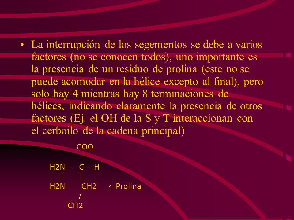 La interrupción de los segementos se debe a varios factores (no se conocen todos), uno importante es la presencia de un residuo de prolina (este no se