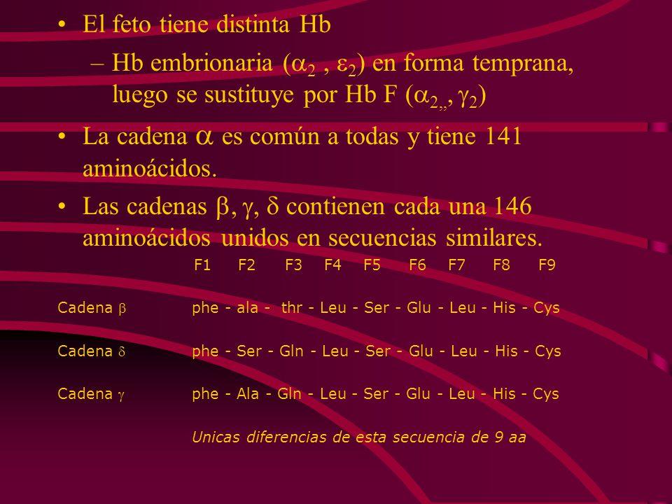 El feto tiene distinta Hb –Hb embrionaria ( 2, 2 ) en forma temprana, luego se sustituye por Hb F ( 2,,, 2 ) La cadena es común a todas y tiene 141 am