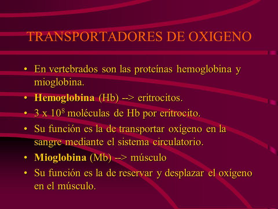 DIFERENCIAS FUNCIONALES ENTRE LA MIOGLOBINA Y LA HEMOGLOBINA La Hb es una proteína alostérica, mientras que la Mb no lo es.