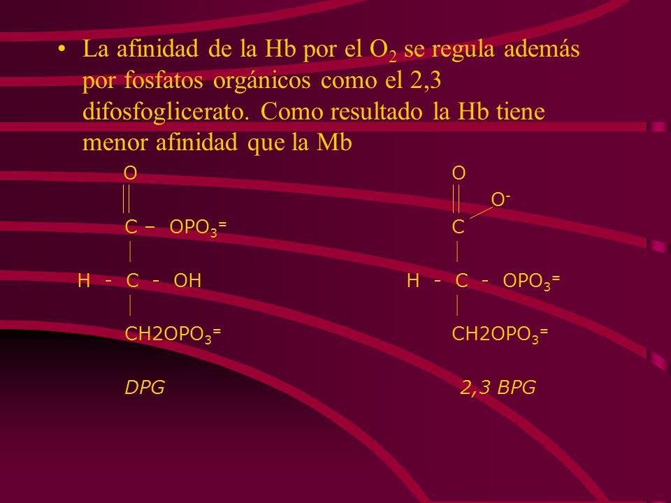 La afinidad de la Hb por el O 2 se regula además por fosfatos orgánicos como el 2,3 difosfoglicerato. Como resultado la Hb tiene menor afinidad que la