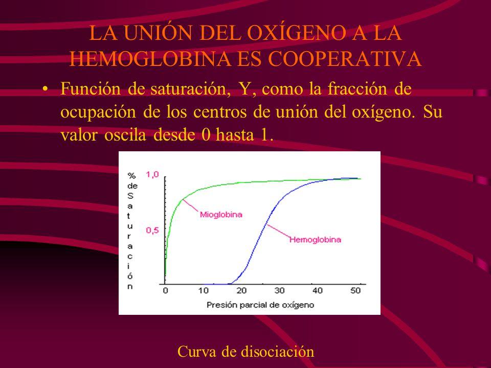 LA UNIÓN DEL OXÍGENO A LA HEMOGLOBINA ES COOPERATIVA Función de saturación, Y, como la fracción de ocupación de los centros de unión del oxígeno. Su v