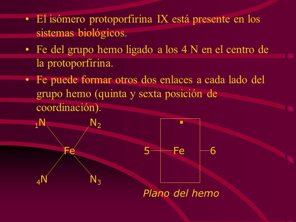 El isómero protoporfirina IX está presente en los sistemas biológicos. Fe del grupo hemo ligado a los 4 N en el centro de la protoporfirina. Fe puede