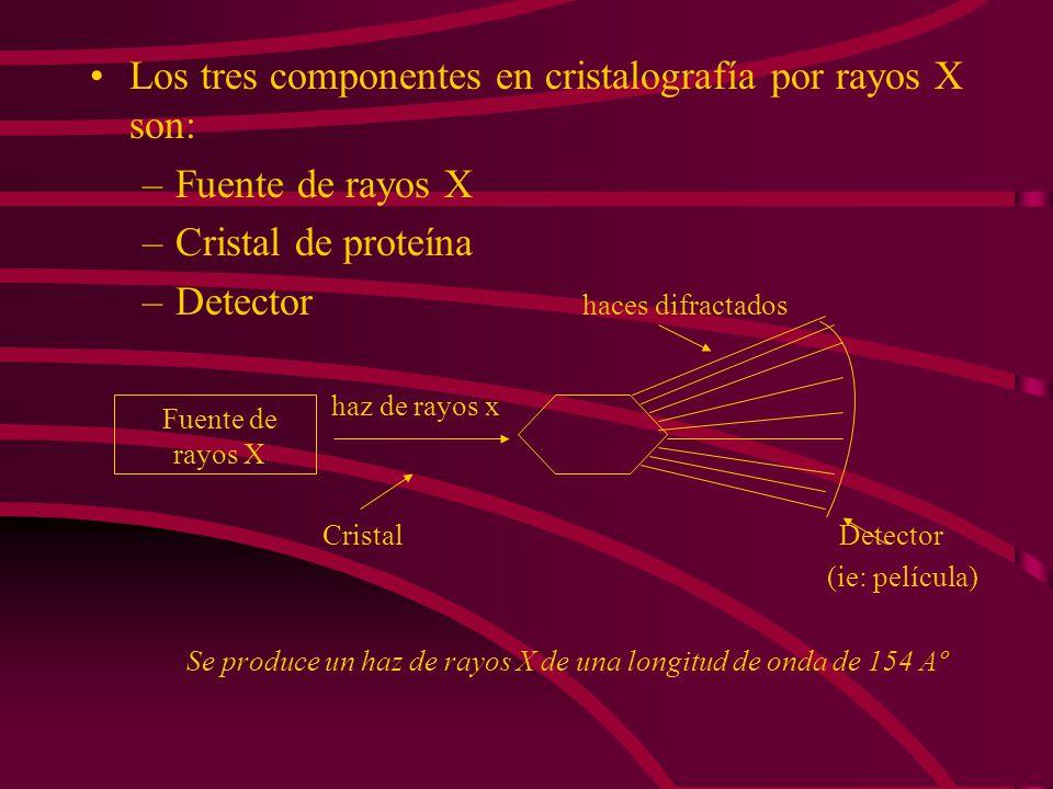 Los tres componentes en cristalografía por rayos X son: –Fuente de rayos X –Cristal de proteína –Detector haces difractados haz de rayos x Cristal Det