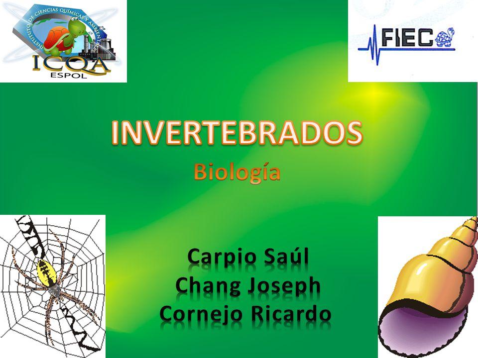 Se llama colectivamente invertebrados a todos aquellos animales (reino Animalia) que no se clasifican dentro del subfilo de los vertebrados (Vertebrata) del filo cordados (Chordata).