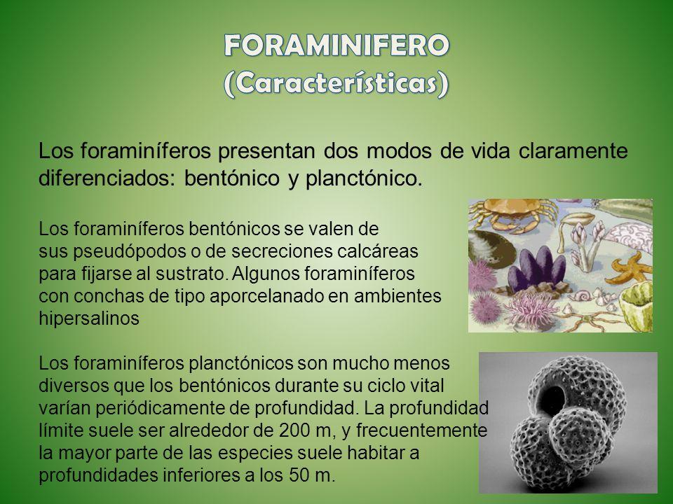 Los foraminíferos presentan dos modos de vida claramente diferenciados: bentónico y planctónico. Los foraminíferos bentónicos se valen de sus pseudópo