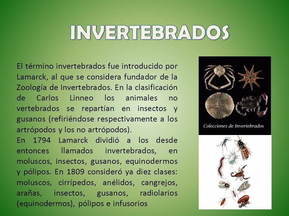 El término invertebrados fue introducido por Lamarck, al que se considera fundador de la Zoología de Invertebrados. En la clasificación de Carlos Linn