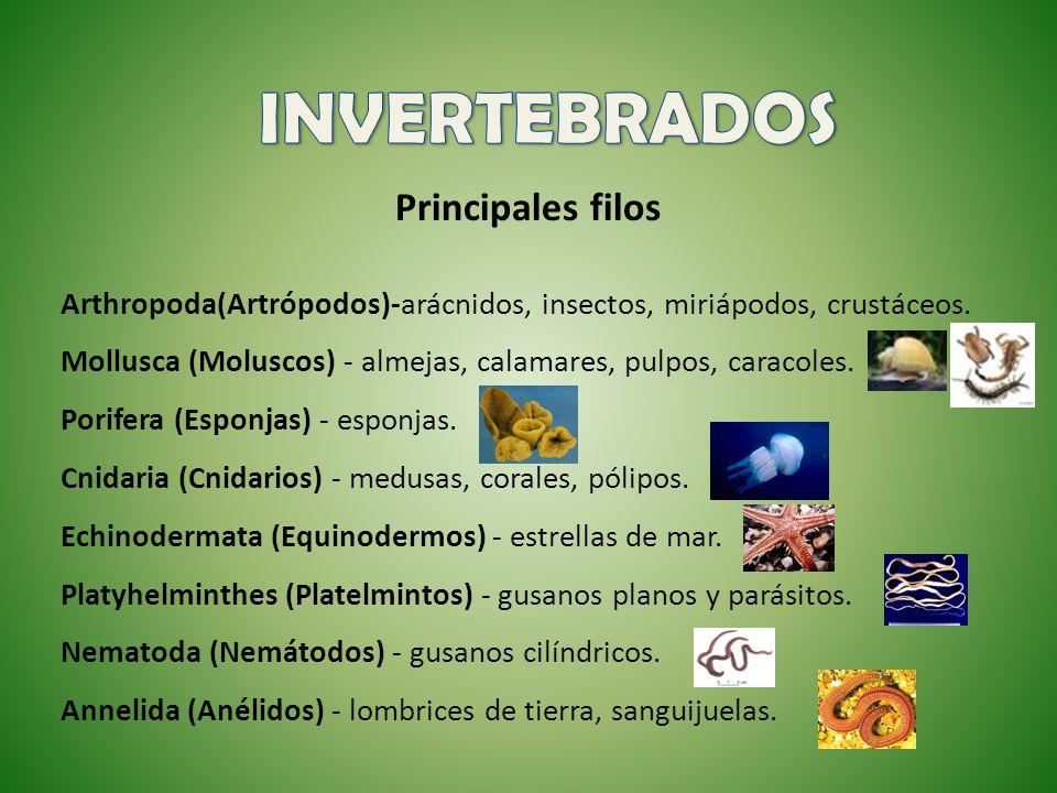 Principales filos Arthropoda(Artrópodos)-arácnidos, insectos, miriápodos, crustáceos. Mollusca (Moluscos) - almejas, calamares, pulpos, caracoles. Por