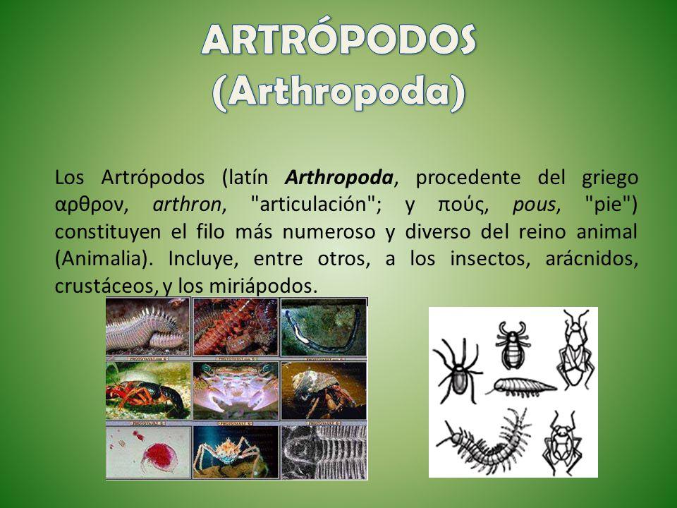 Los Artrópodos (latín Arthropoda, procedente del griego αρθρον, arthron,