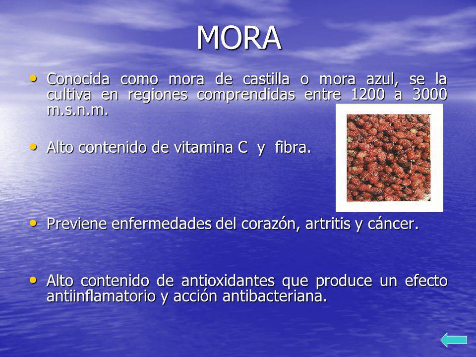 MORA Conocida como mora de castilla o mora azul, se la cultiva en regiones comprendidas entre 1200 a 3000 m.s.n.m. Conocida como mora de castilla o mo