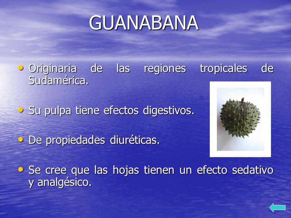 GUANABANA Originaria de las regiones tropicales de Sudamérica. Originaria de las regiones tropicales de Sudamérica. Su pulpa tiene efectos digestivos.