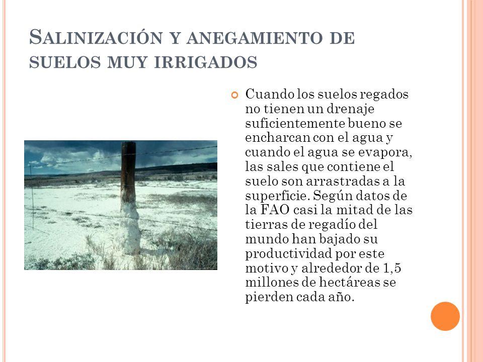 S ALINIZACIÓN Y ANEGAMIENTO DE SUELOS MUY IRRIGADOS Cuando los suelos regados no tienen un drenaje suficientemente bueno se encharcan con el agua y cu