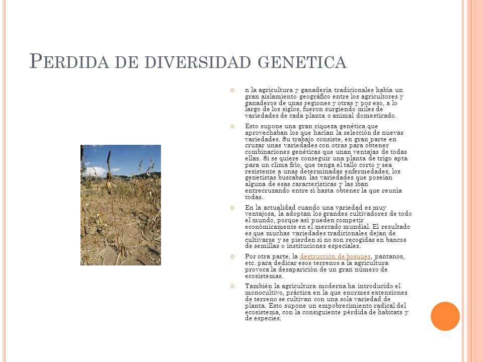 P ERDIDA DE DIVERSIDAD GENETICA n la agricultura y ganadería tradicionales había un gran aislamiento geográfico entre los agricultores y ganaderos de