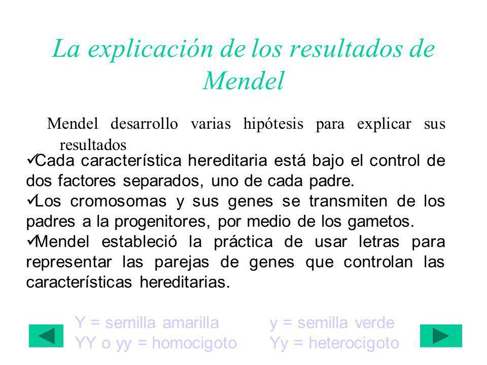 La explicación de los resultados de Mendel Mendel desarrollo varias hipótesis para explicar sus resultados Cada característica hereditaria está bajo el control de dos factores separados, uno de cada padre.