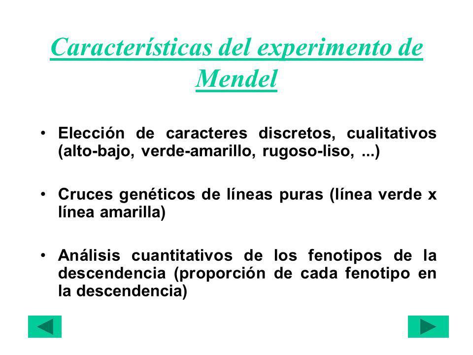 Características del experimento de Mendel Elección de caracteres discretos, cualitativos (alto-bajo, verde-amarillo, rugoso-liso,...) Cruces genéticos