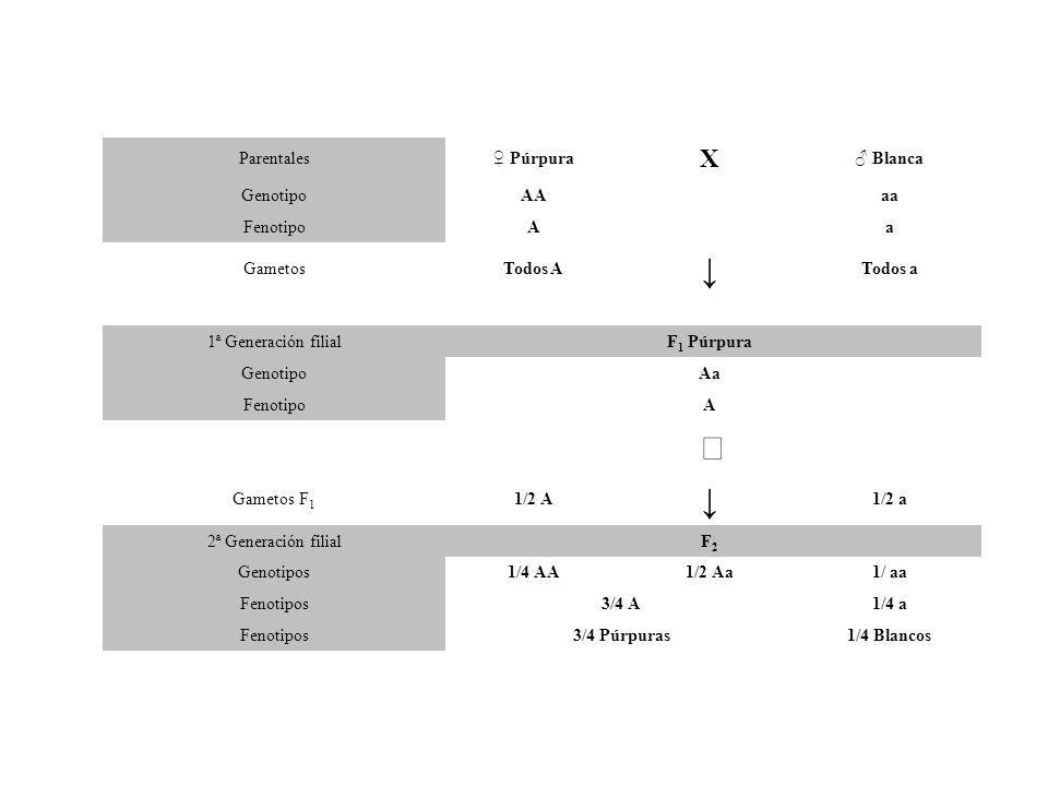 PRINCIPIO DE DOMINANCIA En un organismo híbrido, un gene determina la expresión de una característica particular y evita la expresión de la forma en contraste de esa característica.