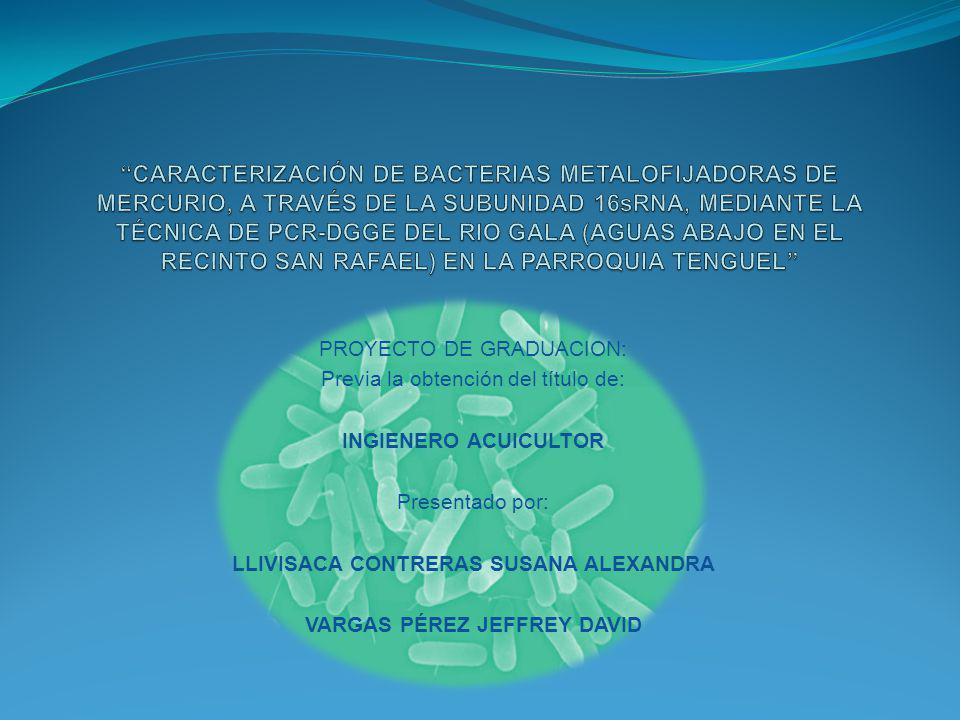 PROYECTO DE GRADUACION: Previa la obtención del título de: INGIENERO ACUICULTOR Presentado por: LLIVISACA CONTRERAS SUSANA ALEXANDRA VARGAS PÉREZ JEFF