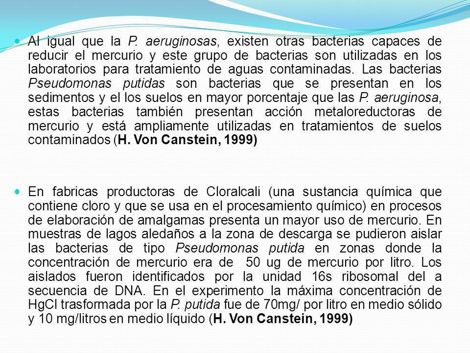 Al igual que la P. aeruginosas, existen otras bacterias capaces de reducir el mercurio y este grupo de bacterias son utilizadas en los laboratorios pa