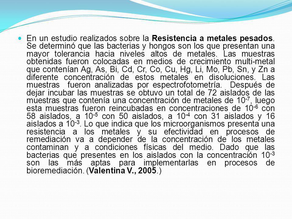 En un estudio realizados sobre la Resistencia a metales pesados. Se determinó que las bacterias y hongos son los que presentan una mayor tolerancia ha